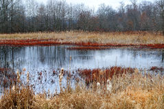 Great swamp Stock Photo