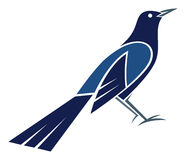 Great-tailed Grackle. Stylized Great-tailed Grackle - vector illustration Royalty Free Stock Photography