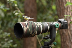 Great tit on a 500mm lens Stock Photo