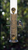 Great tit at a bird feeder. Backlit photo of a Great Tit at a bird feeder in a domestic garden in summer. Bird has a seed in its beak Stock Photography