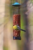 Great Tit on a bird feeder Stock Photo