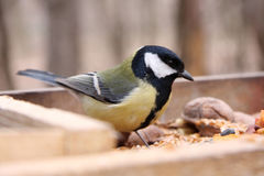 Great tit in birdfeeder. In the park Stock Photos