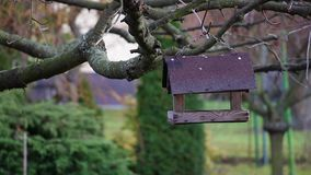 Great Tit and Blue Tit in bird feeder stock footage