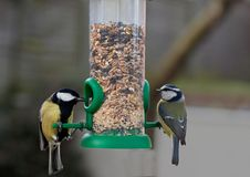 Great Tit and Blue Tit feeding Royalty Free Stock Photography