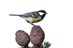 Great tit on cones Stock Image