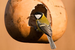 Great Tit in a feeder Royalty Free Stock Photography