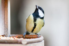 Great tit on feeder Royalty Free Stock Photography