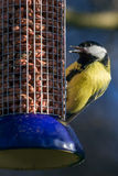 Great Tit on feeder Stock Photos