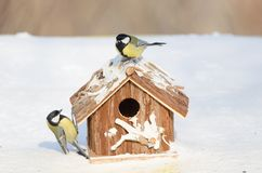 Great tit on a feeding house in a snowy winter day Stock Images
