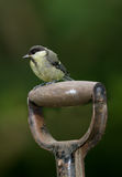 The great tit - in the garden Stock Photo