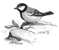 Great Tit illustration. Pen and ink illustration of Great Tit Royalty Free Stock Photos