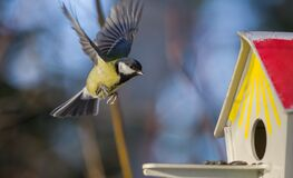 Free Great Tit In Flight Near Birdfeeder Stock Photography - 196569792