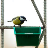 Great Tit, Parus major Stock Photo