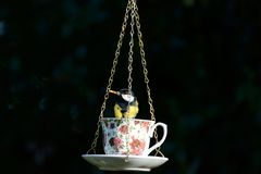 Great-tit, Parus-major, at a cup and saucer bird feeder, with a mealworm stock photography
