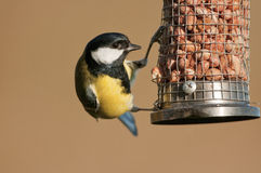 Great Tit (Parus major). On nut feeder royalty free stock photo