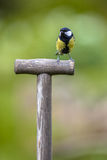 Great tit perched on the handle of a shovel Royalty Free Stock Photos