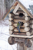 Great tit sits on feeder as small house Royalty Free Stock Photography