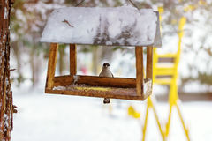 Great tit sits on feeder covered snow in winter forest. Royalty Free Stock Photos