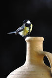 Great tit is sitting on wine jug Stock Photo