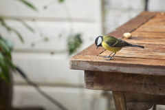 Great Tit on a table Stock Photos