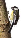Great tit on a tree trunk Stock Photos