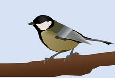 Great titmouse. Vector of a great titmouse resting on a branch royalty free illustration