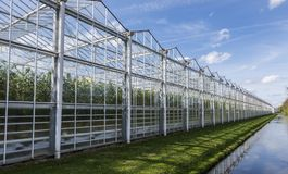 Tomato Greenhouse Harmelen with Ditch. Great tomato nursery and greenhouse in Harmelen with summer sky Royalty Free Stock Photography