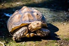 The great tortoise Stock Photos