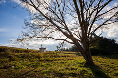 Great tree in countryside field - Wide angle back light. Brazil stock photo