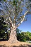 The great tree Royalty Free Stock Photo