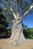 The great tree Royalty Free Stock Photos