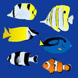 Great tropical fish collection on blue background Royalty Free Stock Image