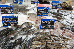 Great variety of fish on market display Royalty Free Stock Photo