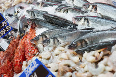 Great variety of fish on market display Stock Images