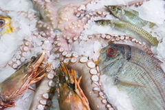 Great variety of fish and seafood Royalty Free Stock Images