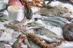 Great variety of fish and seafood Royalty Free Stock Photo