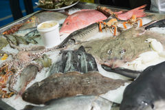 Great variety of fish and seafood Royalty Free Stock Image