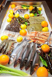 Great variety of fish and seafood Royalty Free Stock Photography