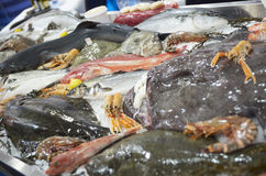 Great variety of fishes and seafood. On fish market ice display Stock Photos