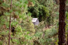Great view in a forest with a house. A great view in a forest with a house royalty free stock photography