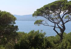 Great view of the Gulf of Saint-Tropez from a hill on a sunny summer day. Large pine on the background of a calm sea. Saint-Tropez, Provence-Alpes-Côte d` stock image