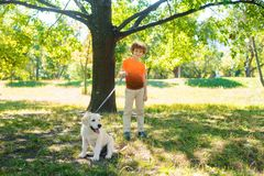 Great walk in the park. For one redhead boy with funny curly hair and beautiful pet. Little child holds a dog-lead and looks in the camera with a happy smile royalty free stock photos