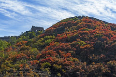 Great Wall in autumn Royalty Free Stock Photos