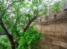 The Great Wall Badaling section, side wall with tree, Beijing, China stock photo