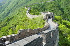 The Great Wall of China. The famous Great Wall of China (Mutianyu section Royalty Free Stock Images