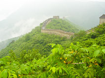 The great wall of China. Looking at the area where it has mostly been repaired. In the foreground is a large amount of vegetation. Image taken from the tree Stock Photos