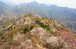 Great Wall of China. Royalty Free Stock Photography