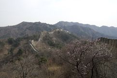 Mutianyu Great Wall, Spring time Beijing. Great Wall with spring flowers at Mutianyu, Beijing. Ming Wall stock photo