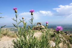 Great Wall and wild flowers Royalty Free Stock Photography