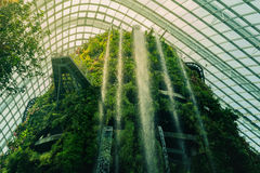 Great waterfall in Singapore cloud forest Royalty Free Stock Images